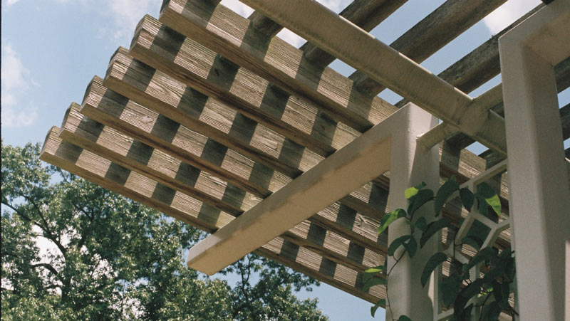 Pergola with greenery growing through it