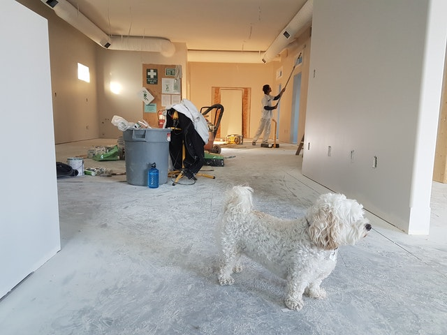 Small dog in a room being renovated