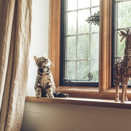 cute cat looks at home windows replaced in portland oregon
